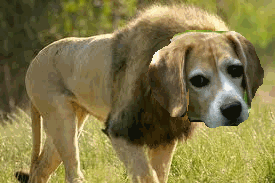 Dog + lion != bear